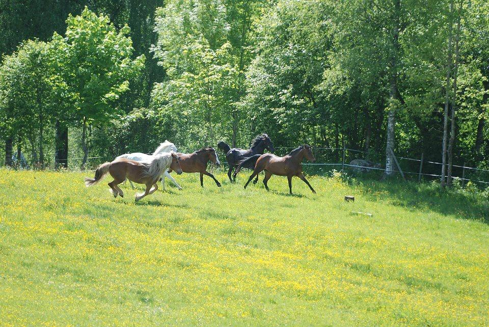 Leie hest sørkedalen